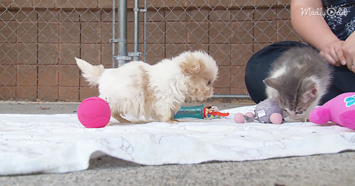 3204-OG2-The-Cutest-Puppy-And-Kitten-Video-You-Will-Watch-Today.-Too-Cute-For-Words