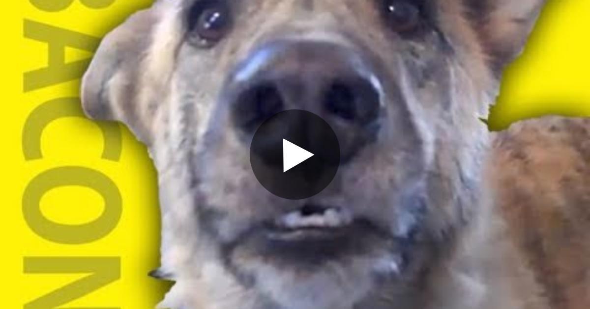 Talking Dog Dont Get Food