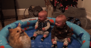 Adorable kids laughing