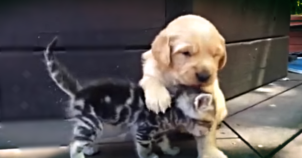 Puppy and Kitten Play