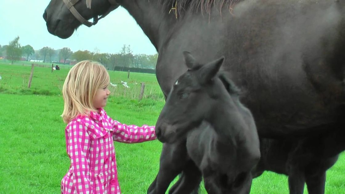 A Rare Breed Big Beautiful Draft Horse Has Two Healthy Twins