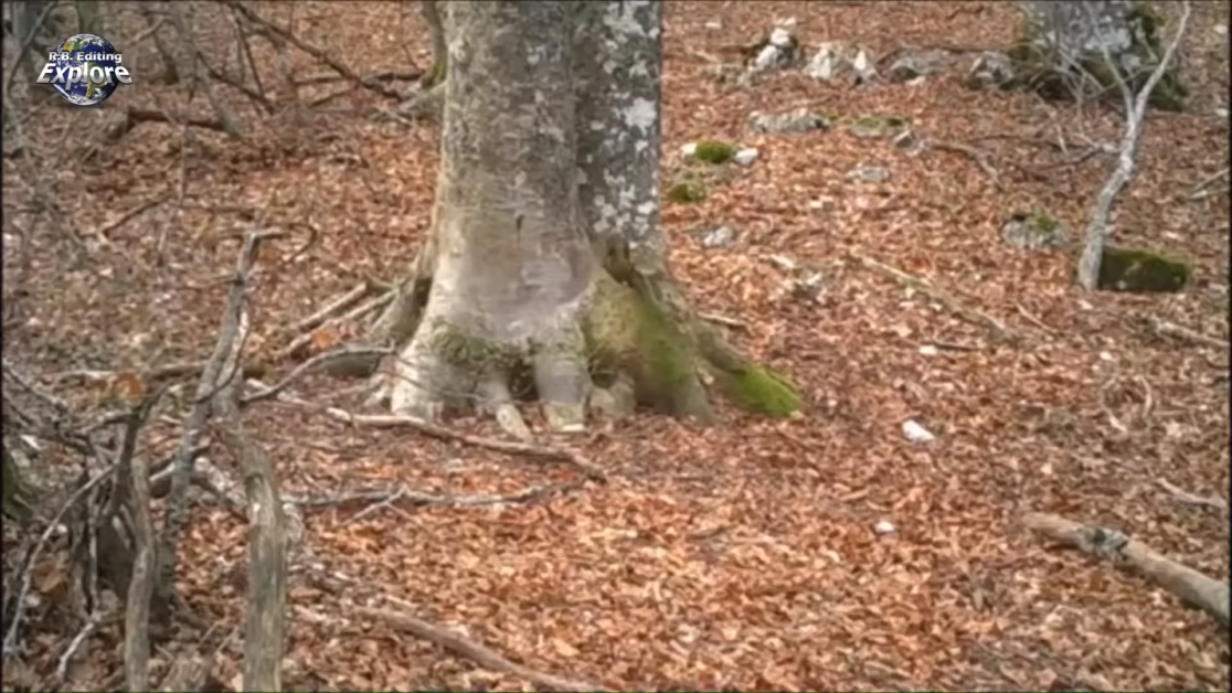He filmed a tree in the woods for a whole year