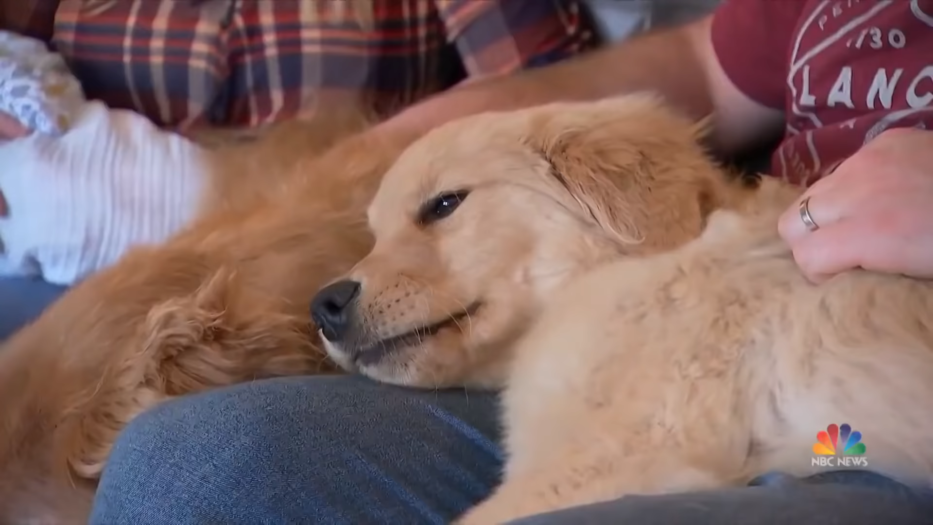 Blind Golden Retriever Has His Own Four-Legged 'Seeing-Eye' Companion _ NBC Nightly News 0-33 screenshot