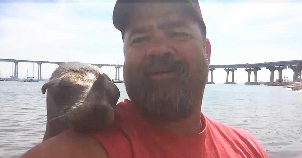 Sea Lion Befriends Man