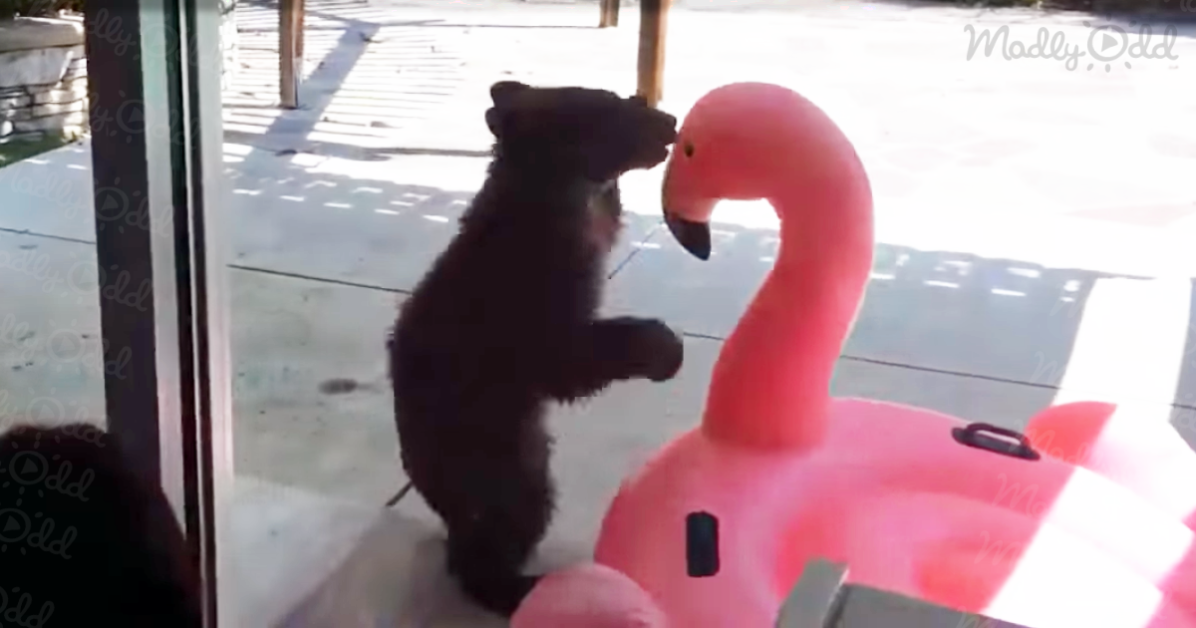Bear and Flamingo