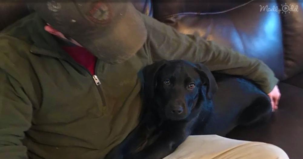 Deaf Man Rescues Deaf Puppy OG3