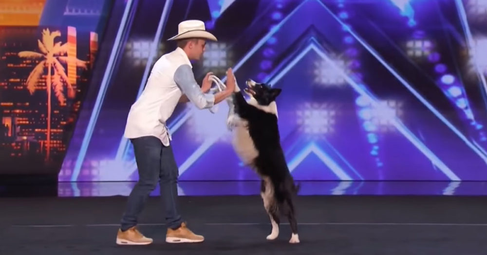 Border Collie Wows OG2