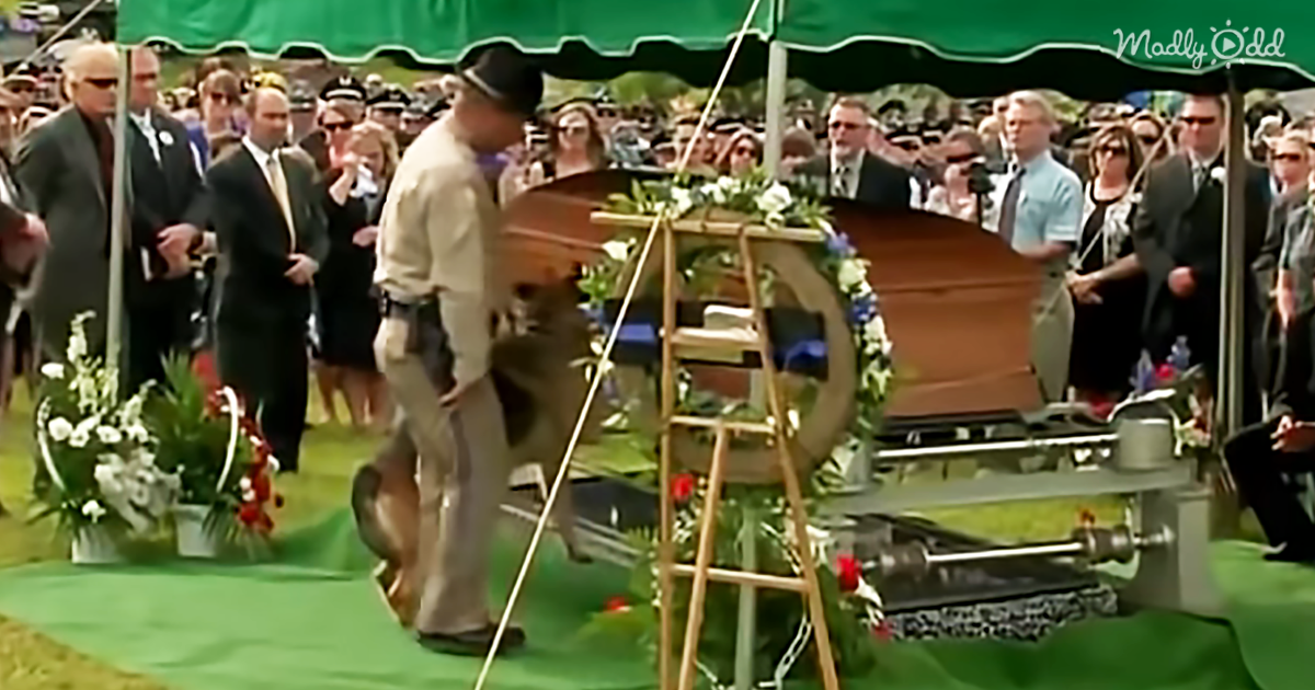 43074-OG1-A-Police-Officer-Was-Killed-in-The-Line-of-Duty.-His-K9-Best-Friend's-Farewell-at-His-Casket-Will-Bring-Tears