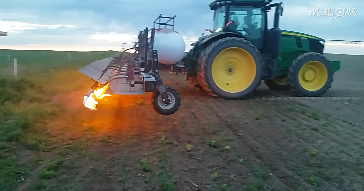 Farmers Are Now Using Flamethrowers To Weed Their Crops