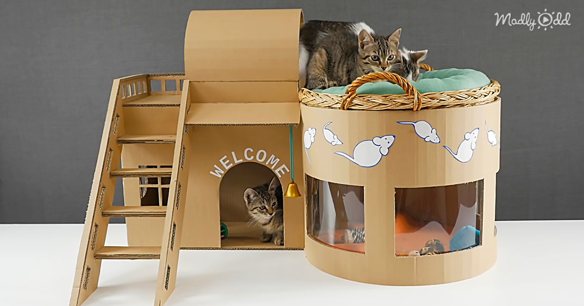 Do-It-Yourself Genius Makes a Mini-Mansion For His Kittens Out Of Cardboard