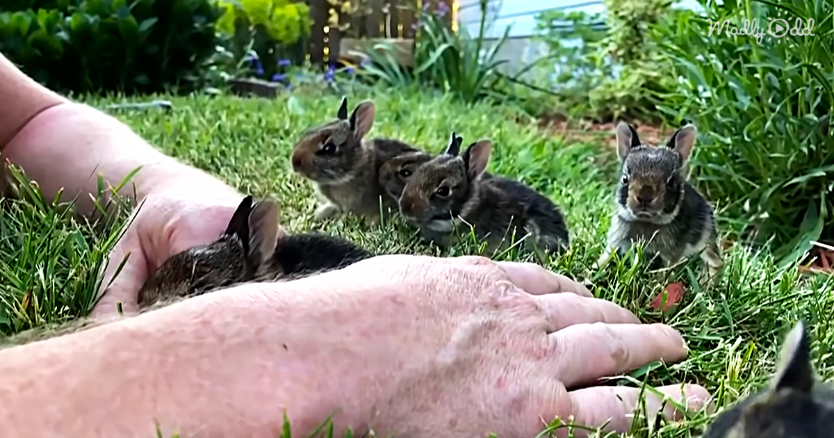 Man Charms 6 Baby Bunnies Into Being His Friends, And We're Dying From The Cute