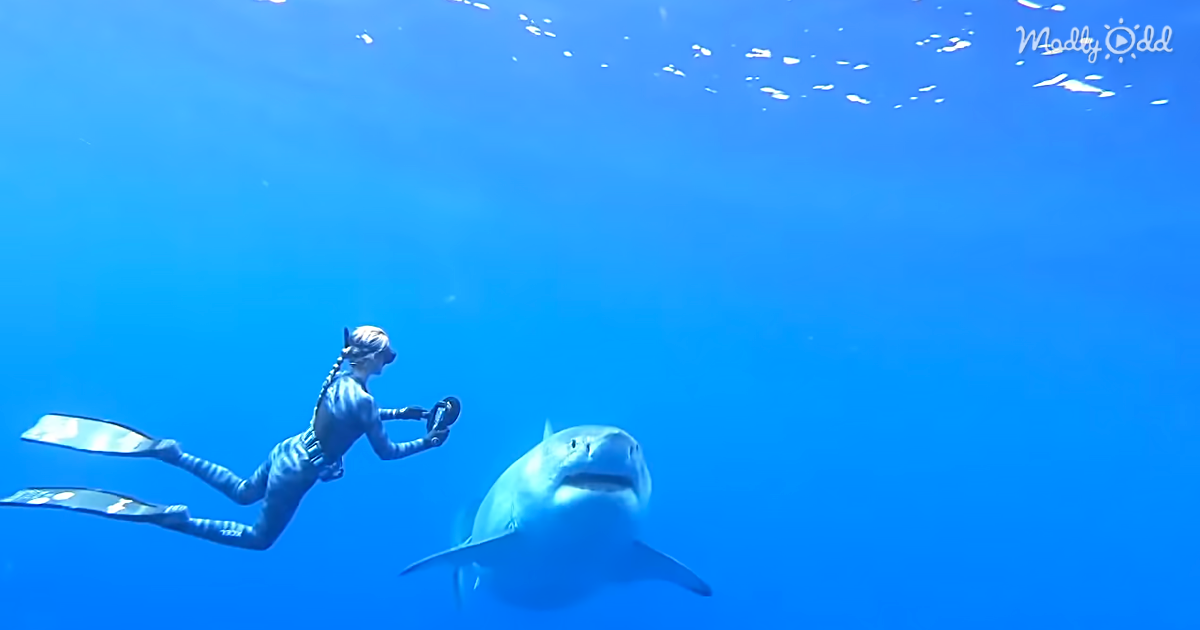 Woman Gets The Chance To Swim With A Famous Great White Shark