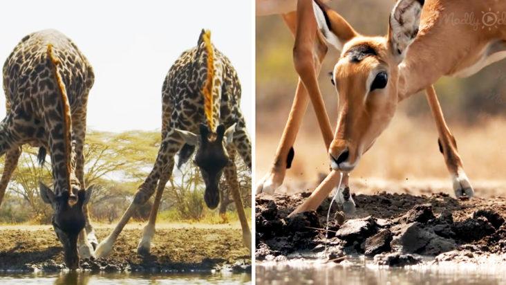 Wild Animals gathering around a waterhole