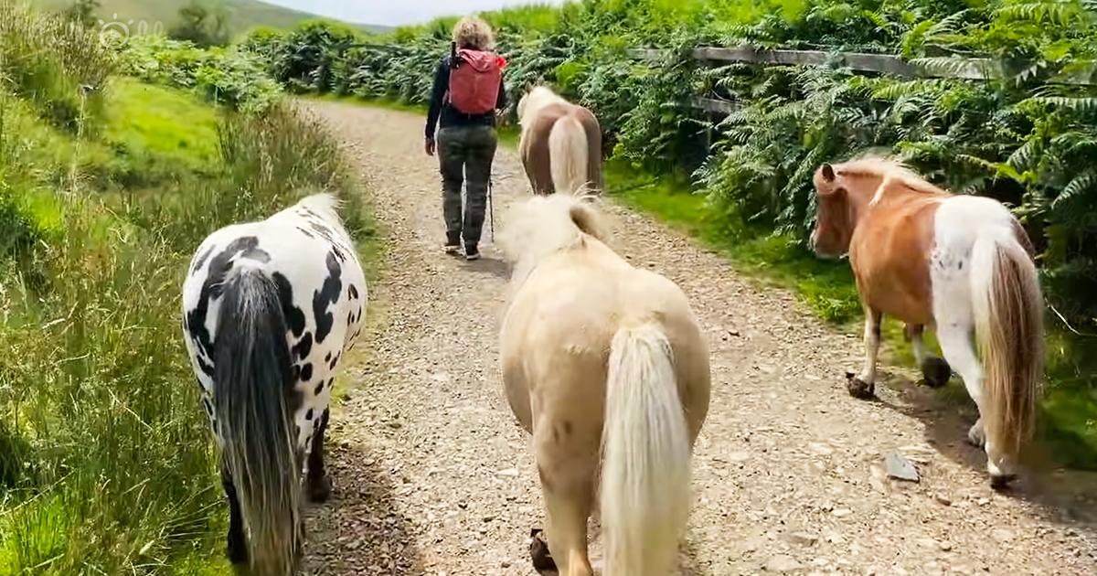 Mini ponies on liberty trail