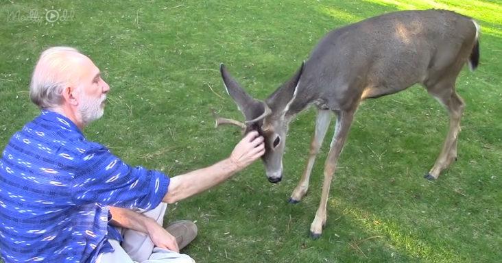 wild deer buck named Yoda
